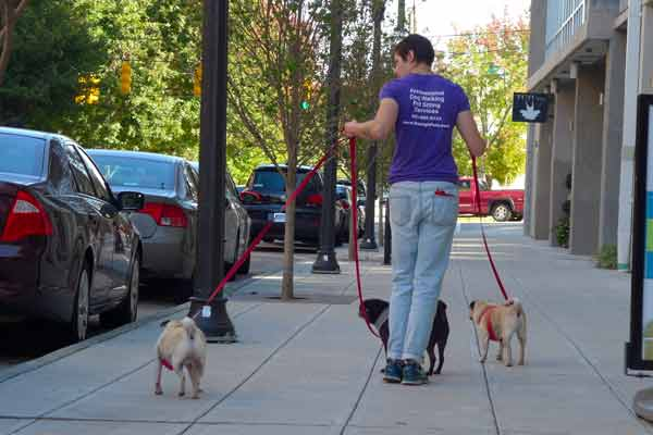 dog walking photos